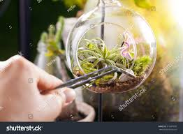 Glass Globes For Garden Terrarium Garden Scene Glass Ball Shape Stock Photo 519687850