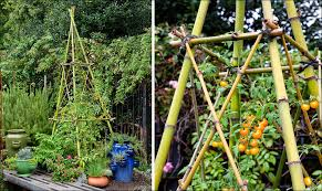 Bonnie Plants Patio Tomato Prop Up Towering Tomato Plants With This Clever Bamboo Trellis