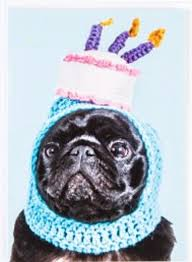 Pug Birthday Meme - pug birthday card unique 106 best birthday memes images on pinterest