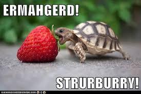 Ermahgerd Animal Memes - image 353939 ermahgerd know your meme