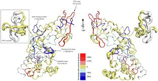 distal loop flexibility of a regulatory domain modulates dynamics