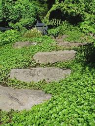 13 amazing stepable plants sedum ground cover ground covering