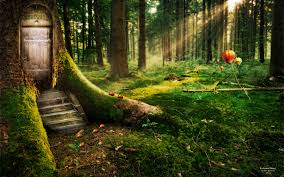 enchanted forest wallpaper for home wallpapersafari