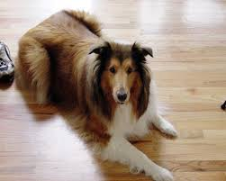 best pet flooring options for dogs dengarden
