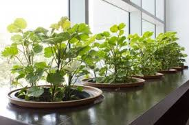 indoor hanging herb garden ideas indoor kitchen garden ideas
