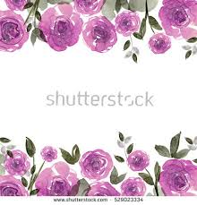 purple roses purple roses stock images royalty free images vectors