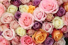 different color roses color meaning flower meaning