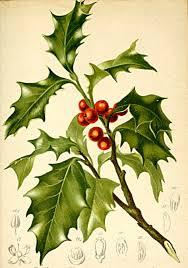 christmas symbols and decorations plants historia vivens