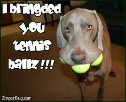 Funny Tennis Memes - funny dog with tennis balls photo glitter graphic greeting