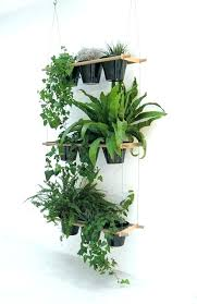 plants low light indoor plants low light tekino co