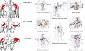 exercises tips for a complete shoulder workout fitness workouts