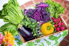 free photo harvest organic garden gardening green vegetables max
