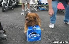 Bud Light Meme - dog is protective over bud light beer humoar com