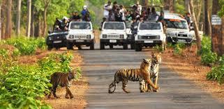 jeep safari confirm tadoba andhari jeep safari tour book tadoba jungle