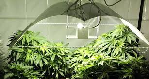 best light for weed seedlings grow guide 2 what you ll need to start growing your own weed