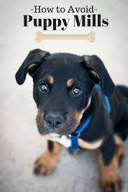best 25 puppy mill ideas on pinterest puppy shelters save