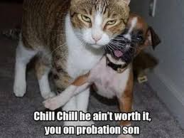 Chill Out Bro Meme - 72 best cats images on pinterest funny animal funny animal pics