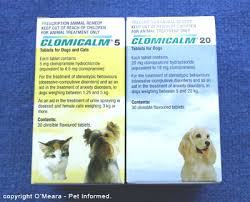 dog euthanasia pet euthanasia everything an owner must about putting