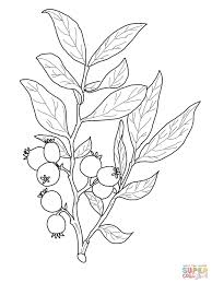 huckleberry branch coloring page free printable coloring pages