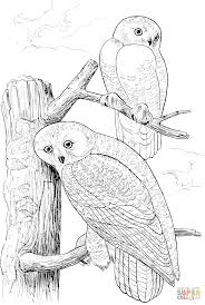 two snowy owls coloring page free printable coloring pages