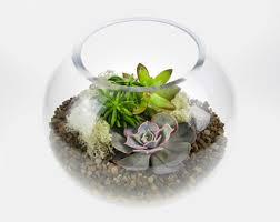 angled glass bowl succulent terrarium large size featuring 3