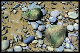 edible rocks strandlines and tide pools nature chronicles