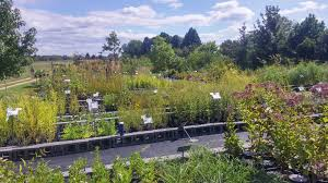 best native plants visiting us edge of the woods native plant nursery