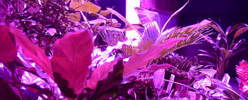 mcob grow lights online multiple chip on board technology
