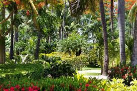 Tropical Landscape Design by 14 Cold Hardy Tropical Plants To Create A Tropical Garden In Cold
