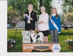 bluetick coonhound kennels in tennessee papillon puppies for sale papillon puppies papillon dogs breeders