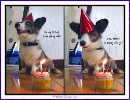 Corgi Birthday Meme - happy birthday memes with funny cats dogs and cute animals