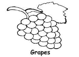 grape coloring page glum me