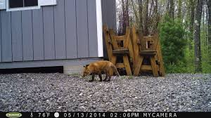 set up a trail camera in my backyard photo section bob is the