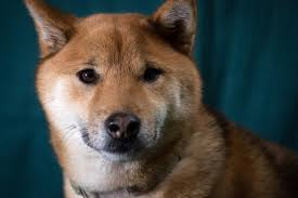 Dogecoin Meme - what is the dogecoin price a 1 billion cryptocurrency meme