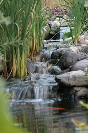 Backyard Pond Ideas With Waterfall Avoiding Waterfall Problems The Pond Blog