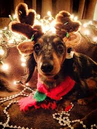 29 best dachshund through the snow images on pinterest
