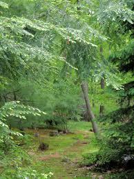 designing paths through the woods u2013 paths or trails u2013 tomato