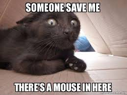 Save Me Meme - someone save me there s a mouse in here schitzo cat make a meme
