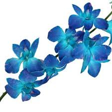 Blue Orchid Flower - 20 best flowers images on pinterest blue flowers blue orchids