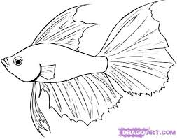 25 draw fish ideas fish sketch fish