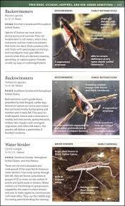 national wildlife federation field guide insects and spiders of