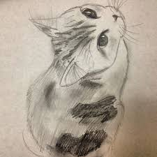 the 25 best cat sketch ideas on pinterest cat reference how to
