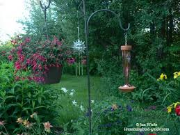 52 best hummingbird gardens and more images on pinterest