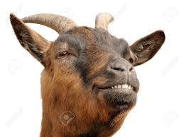 goat stock photos u0026 pictures royalty free goat images and stock