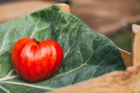 healthy eating tips summer tomato upgrade your healthstyle