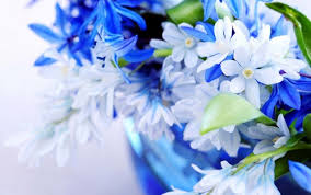 white and blue flowers flowers images white blue flowers hd wallpaper and background