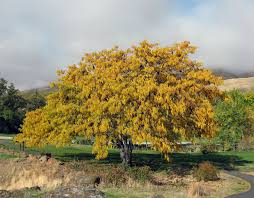 100 arborist connecticut study guide davey tree expert