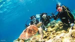 snorkeling images Island snorkeling klook jpg