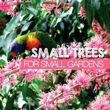 flowering trees for small gardens uk evergreen flowering trees for