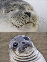 Seal Meme Generator - awkward moment seal memes imgflip